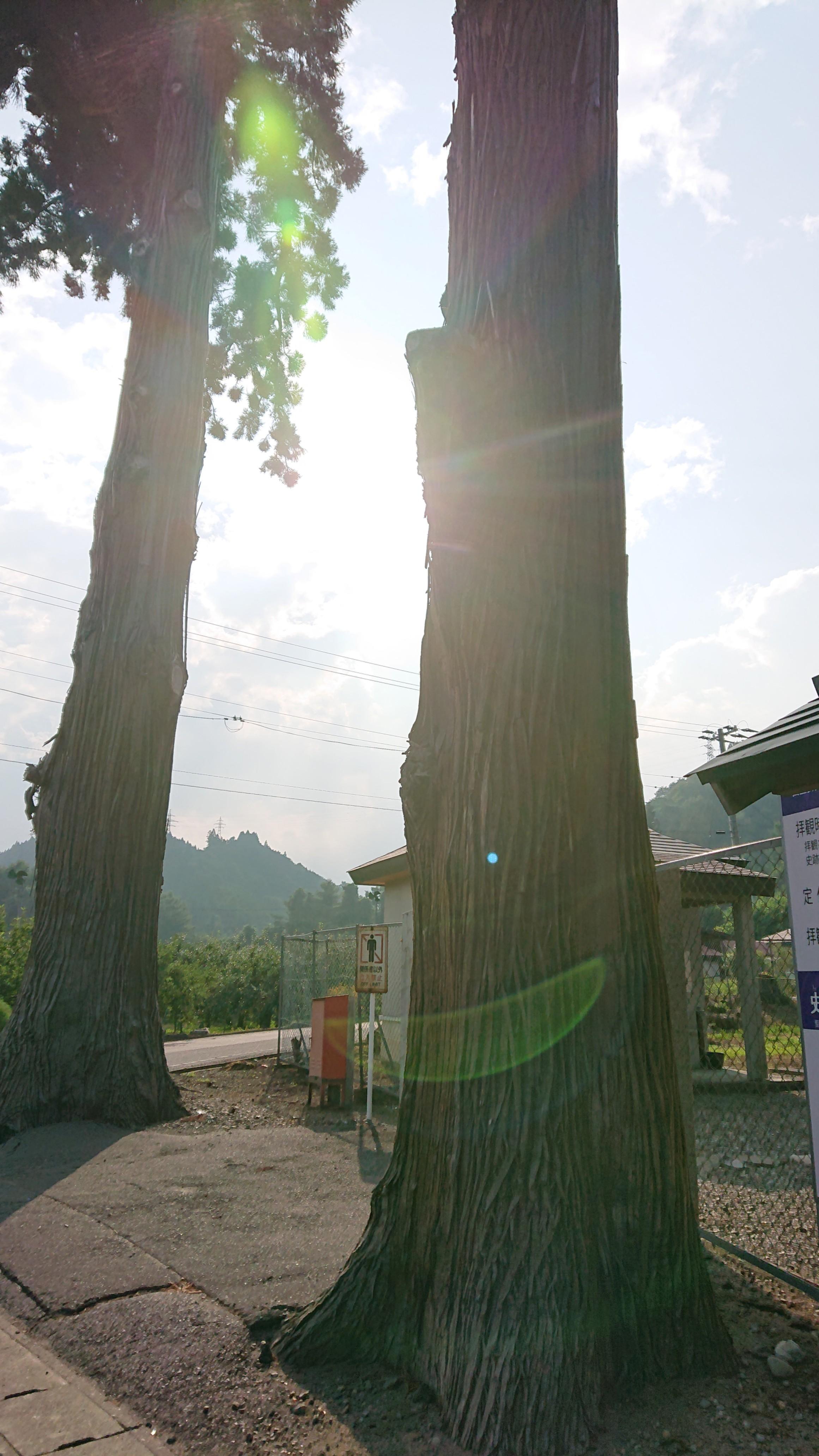 南部利康御霊屋入り口の木々
