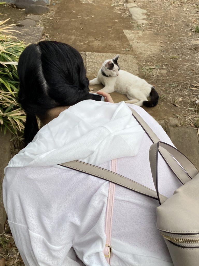 谷中霊園の猫